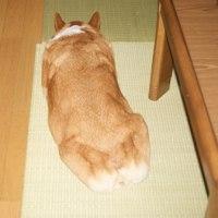 先代犬もも((T_T)がでる)の写真とマリィとDMの心配