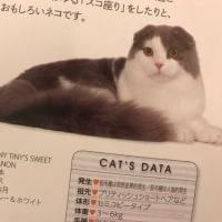 日本と世界の猫のカタログ2017に載りました💕