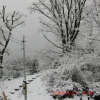 一転、雪景色