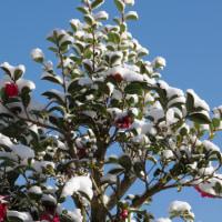 降雪と前日のメジロの動き