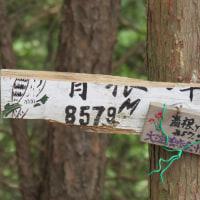 ▲吉野山ハイク▲
