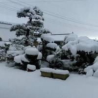 故郷の雪景色。ラインで、・・・帰りたーい。・・