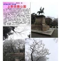 花巡り 「桜-その393」 上野恩賜公園
