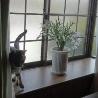 出窓と、シャコバと、るなを君