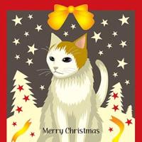 2016年11月19日メリークリスマス猫。