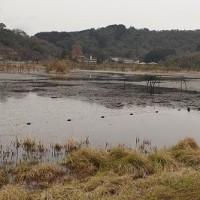 第142回古都旅歩き 深泥池、上賀茂神社