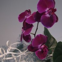 いしかわ四季の花協会展を見てきました。(5/12)NO.7