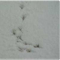 雪あと・・