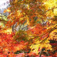 色とりどりの紅葉