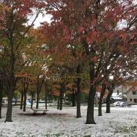 雪雪雪だ!