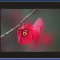 うっとりしている花