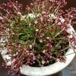 可愛らしい植物