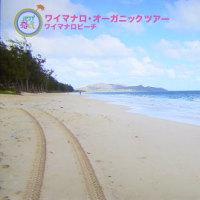ハワイに恋して 1月8日