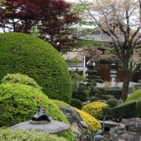 江南市・「曼荼羅寺の藤まつり」を