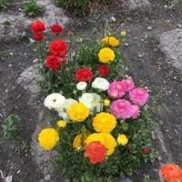 母のお花畑