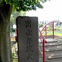 北山公園・菖蒲 1