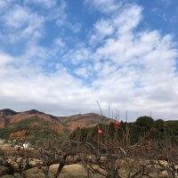 筑波山の紅葉見頃です🎵