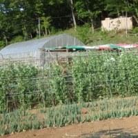 2017年4月30日(日) 夏野菜の畑づくり