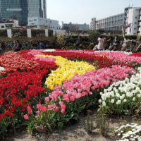 都会のお花畑 beautiful flower garden in a major downtown in Osaka city