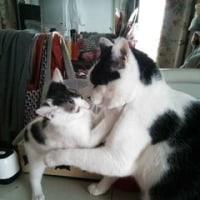 4月から「飼い主のいない猫を増やさない活動支援事業」が変わります🐾