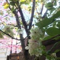 寒川神社ツアー  感想ありがとうございますm(_ _)m
