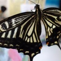 蝶は元気です。