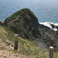 襟裳岬も少しずつ緑が広がって来ました。(^-^)/