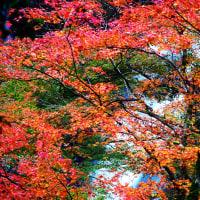 兵庫県の滝