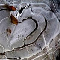 薄氷の造形