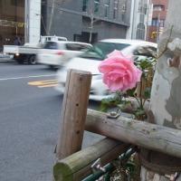 新宿通りの一輪