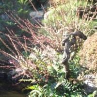 梅 と 池