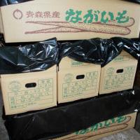 晴耕雨読日記 平成28年11月30日水曜日 初の長芋選別