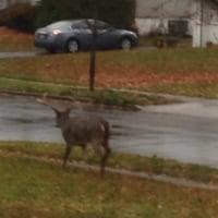 鹿カッコいい