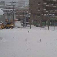 2016/12/11   午前8時半札幌の空模様   今日も雪がどっさり(;´Д`)