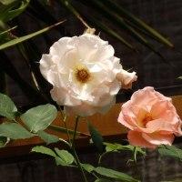 この日この花(2)