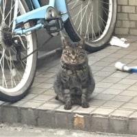 猫三昧 Cat-loving - 外猫 : Happy?