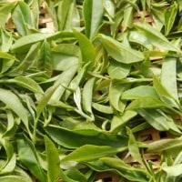 秋摘み紅茶