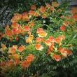 「甲斐駒山麓の山里の花の写真をお楽しみ下さい」