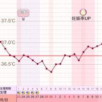D30 高温期15日目