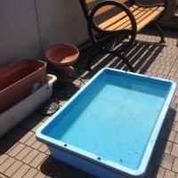 暑い日は水換えに限ります!