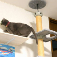 猫って「レーザービーム」に反応して遊ぶの? ~ ELECOM 緑色レーザーポインターELP-GO3BK ~