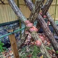 鮎&木々にとっても恵みの雨