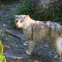 フクという名の♂猫