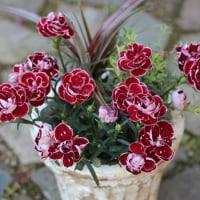 母の日にお花を送りましょう~