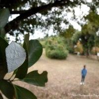 葉裏に目立つ銀白色