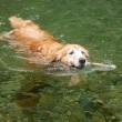 暑すぎて、ももちゃんと一緒に泳ぎました
