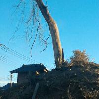 年の瀬  朽ちた老木  (私のスナップ)