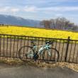 ビアンキで琵琶湖に行った菜の花と山の残雪が春ですねぇ