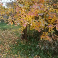 My autumn leaves of red and gold(その六)my fallen leaves・・・・
