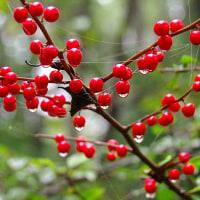 10月の森の青黒い実